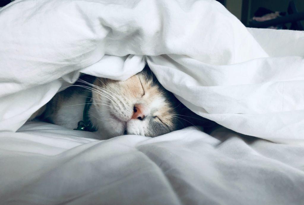 布団で気持ちよさそうに眠る子猫